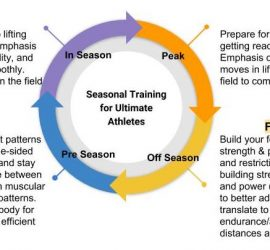 "Image of Seasonal Training for Ultimate Athletes. Shows a circle made of four arrows feeding into each other. Information for Off-Season: Foundational Strength & Power Build your foundation through upping core control and build strength & power, focusing on work to correct imbalances and restrictions in your body. Workouts cycle between building strength (using heavy loads on slower movements) and power (using lighter weights and dynamic movements) to better adapt to the training stimulus and be ready to translate to on-field performance. Build your endurance/aerobic base through running long slow distances and tempo runs so you can go all tournament. Pre-Season: On-Field Translation Draw direct connections of the lifting movement patterns into running technique. Transition to more single-sided movements to ensure you're ready to perform and stay healthy once the season starts. Workouts cycle between strength and power, with an increased focus on muscular endurance and stability for on-field movement patterns. Work on running mechanics and prepare your body for the impact of playing ultimate. Become a more efficient and injury-resistant mover. In-Season: Efficient Movement Continued prehab & rehab work integrated into lifting workouts to keep you practicing and playing. Emphasis on single-sided movements with mobility, stability, and soft tissue care to keep your joints moving smoothly. Conditioning targeted at efficient movements on the field and removing your ""energy leaks"". Peak: Maximal Performance Prepare for the rigors of end of season performance, getting ready to peak for your major tournaments. Emphasis on muscular endurance and repeated power moves in lifting. High-intensity, high-recovery work on the field to complement your practices."